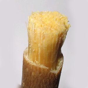 Мисвак - традиционная натуральная зубная щетка
